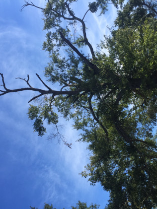 Tree Care Specialist in Tyler, TX