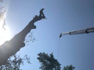 tree removal tyler tx
