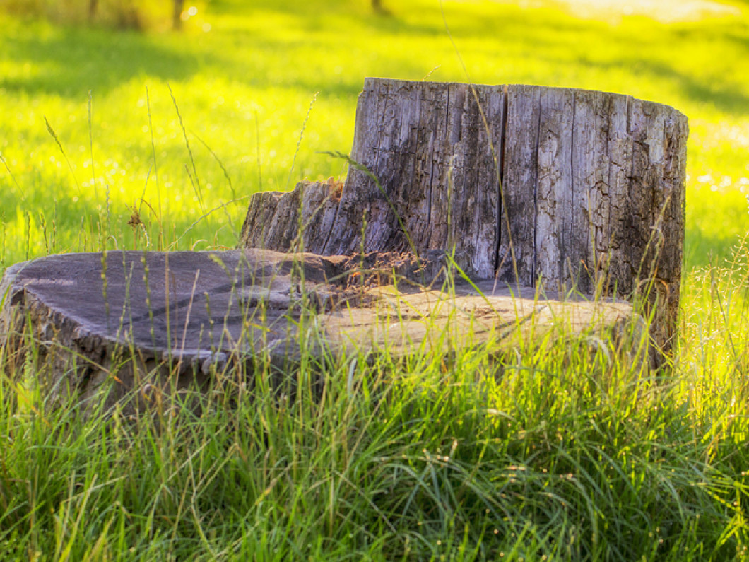 REMOVE THAT UGLY TREE STUMP IN YOUR YARD
